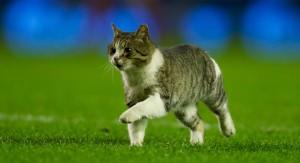 Кот выбежал на поле в матче Ливерпуль - Тоттенхэм