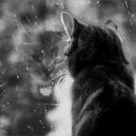 Дождливые выходные