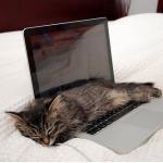 Немного отдохнуть в рабочий день