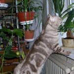 Вредные для здоровья комнатные растения