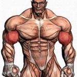 Как качать мышцы рук