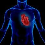 Тренируем сердечно-сосудистую систему