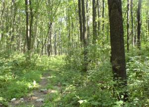 Лес - естественная среда обитания многих животных